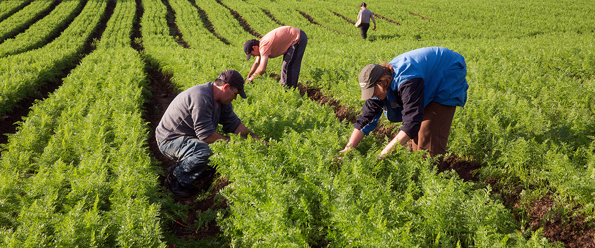 Agricultura-familiar-produz-mais-50%-alimentos--Brasil
