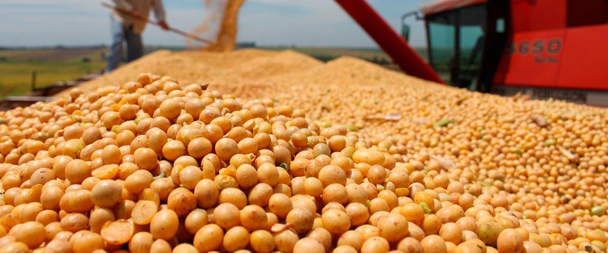 Exportações do agronegócio crescem em agosto
